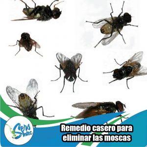 Para nosotros es importante tu bienestar ?? Te regalamos este remedio casero ?? Necesitas: 1 botella atomizadores. 1/2 litro de vinagre. 10 horas de detergente. 1 rama de canela y agua. Preparación: Poner todos los ingredientes en la botella y batir ?? ¡así de fácil es! Etiqueta a quien le pueda ayudar este remedio ?? #sersintec #etiquetaa #guayana #pzo #venezuela #remedio #casero #adiosmoscas #moscas #amadecasa #casa #hogar